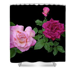 3 Pink Roses Cutout Shower Curtain