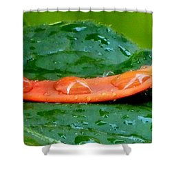 Shower Curtain featuring the photograph Rain Drops by Betty-Anne McDonald