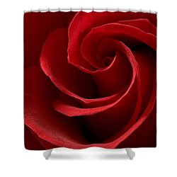 Red Rose I Shower Curtain