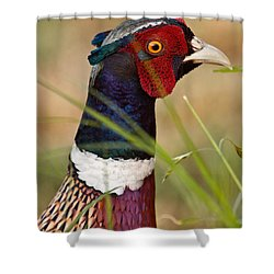 Ring-necked Pheasant Shower Curtain by Doug Herr