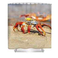 Sally Lightfoot Crab On Galapagos Islands Shower Curtain