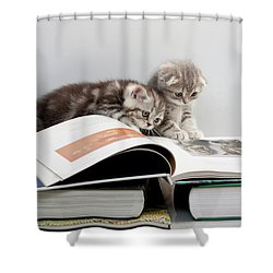 Scottish Fold Cats Shower Curtain