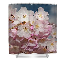 Silicon Valley Cherry Blossoms Shower Curtain