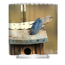 Spread Your Wings Shower Curtain by Mike Dawson