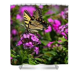 Tiger Swallowtail Shower Curtain by Yumi Johnson