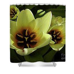 Tulip Lights #4 Shower Curtain