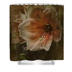 Vintage Amaryllis Shower Curtain by Richard Cummings