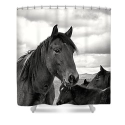 Virginia Range Mustangs Shower Curtain