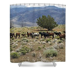 Wild Mustang Horses Shower Curtain