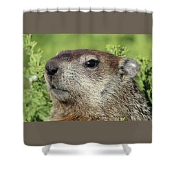 Woodchuck Calverton New York Shower Curtain by Bob Savage