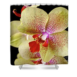 Shower Curtain featuring the photograph Yellow Orchid by Dariusz Gudowicz