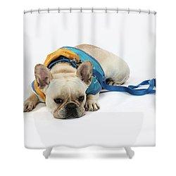 3010.066 Therapet Shower Curtain