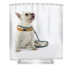 3010.067 Therapet Shower Curtain