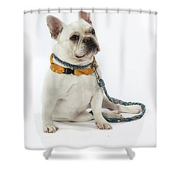 3010.068 Therapet Shower Curtain