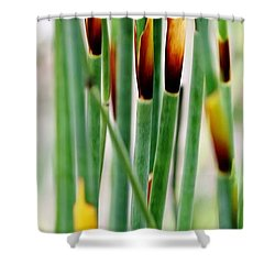 Shower Curtain featuring the photograph Bamboo Grass by Werner Lehmann