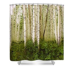 3993 Shower Curtain by Peter Holme III