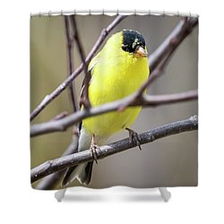 Shower Curtain featuring the photograph American Goldfinch  by Ricky L Jones
