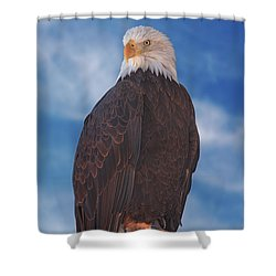 Bald Eagle Shower Curtain by Brian Cross