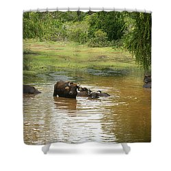 Buffalos Shower Curtain by Christian Zesewitz
