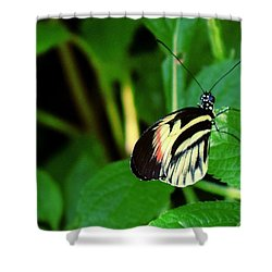Butterfly No. 4 Shower Curtain by Sandy Taylor