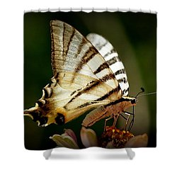 Butterfly Shower Curtain by Sylvie Leandre