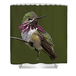 Calliope Hummingbird Shower Curtain
