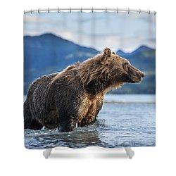 Coastal Brown Bear  Ursus Arctos Shower Curtain by Paul Souders