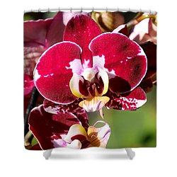 Flower Edition Shower Curtain