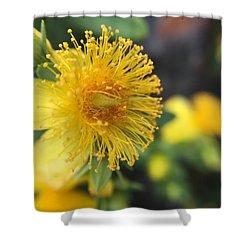 Flower Shower Curtain by Maxim Tzinman