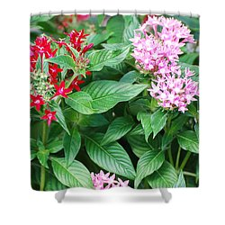Flowers Shower Curtain by Rob Hans
