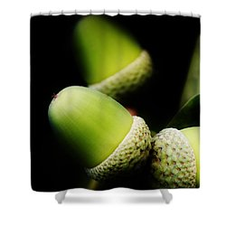 Foliage And Acorns Shower Curtain by Werner Lehmann