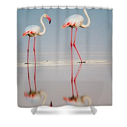 Greater Flamingos Phoenicopterus Roseus Shower Curtain by Panoramic Images