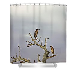 Green Heron Shower Curtain by Peter Lakomy