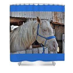 Horse Shower Curtain by Savannah Gibbs