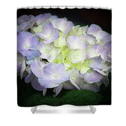 Hydrangea Shower Curtain by Cathy Donohoue
