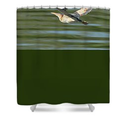 Least Bittern Shower Curtain by Tam Ryan