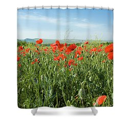 Meadow With Red Poppies Shower Curtain by Irina Afonskaya