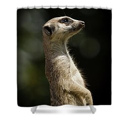 Meerkat Shower Curtain by Craig Dingle