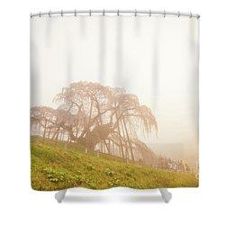 Shower Curtain featuring the photograph Miharu Takizakura Weeping Cherry05 by Tatsuya Atarashi