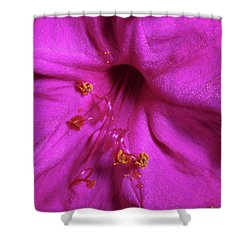4 O'clock Bloom Shower Curtain by Richard Rizzo