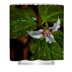 Shower Curtain featuring the photograph Painted Trillium  by Thomas R Fletcher