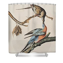 Passenger Pigeon Shower Curtain by John James Audubon
