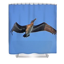 Shower Curtain featuring the photograph 4- Pelican by Joseph Keane
