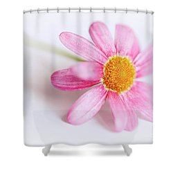 Shower Curtain featuring the photograph Pink Aster Flower by Nick Biemans