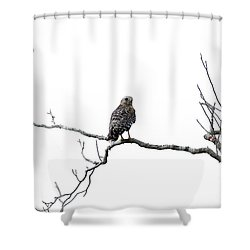 Red Shouldered Hawk Shower Curtain by Anne Rodkin