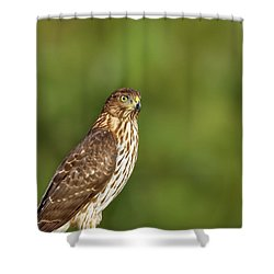 Shower Curtain featuring the photograph Red-tailed Hawk by Peter Lakomy