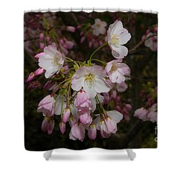 Silicon Valley Cherry Blossoms Shower Curtain by Glenn Franco Simmons