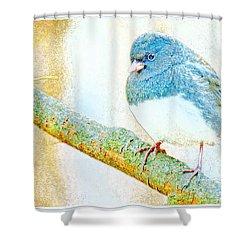Shower Curtain featuring the digital art Slate Colored Junco Snowbird Male Animal Portrait by A Gurmankin