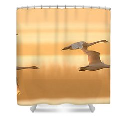 Shower Curtain featuring the photograph 4 Swans by Kelly Marquardt