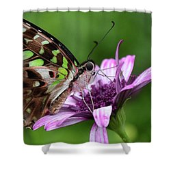 Tailed Jay Shower Curtain by Ronda Ryan